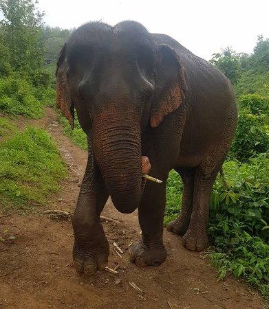Sayaboury, Laos: IMG_20180430_172017_917_large.jpg