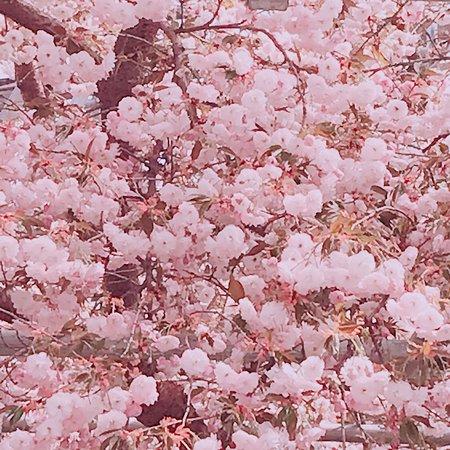 Nenohi Park: photo0.jpg