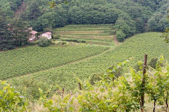 Società Agricola Castelveder