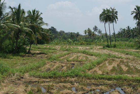 Pelwehera Village Resort : View from our bedroom.