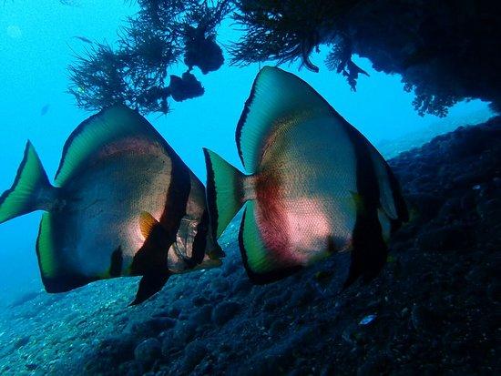 水游天堂潜水中心照片
