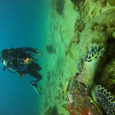 Aqua Vision Scuba Diving: photo0.jpg
