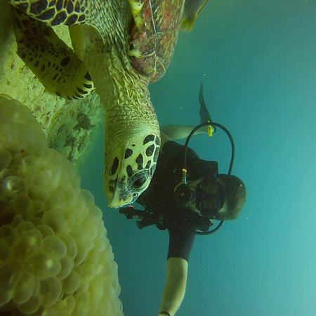 Aqua Vision Scuba Diving: photo1.jpg
