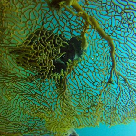 Aqua Vision Scuba Diving: photo3.jpg
