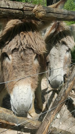 Cessapalombo, Italy: Pegaso e Nettuno....se ben ricordo