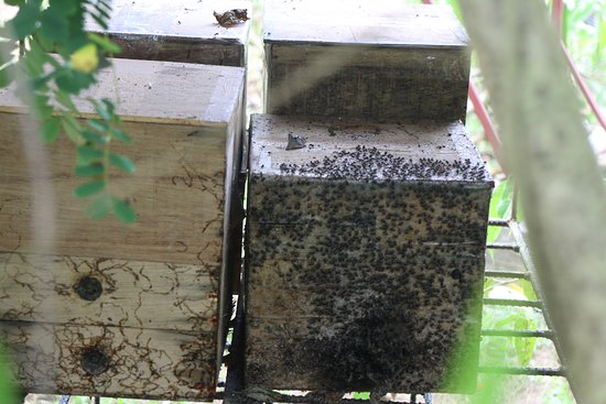 Milea Bee Farm: These are one of their many beehives in the farm that you can see up close!