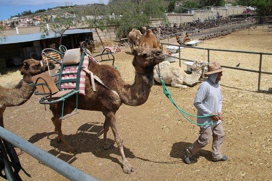 Camel Park: Our Guide
