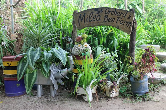 Milea Bee Farm: This is one of many designs in the place. I really appreciated the creativity in their designs <