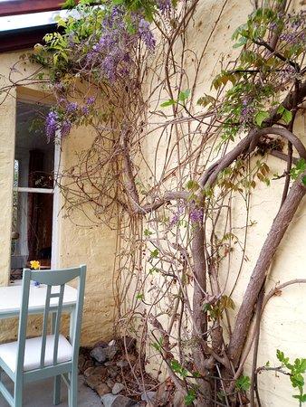 Woodwick House : Dettaglio della veranda con glicine