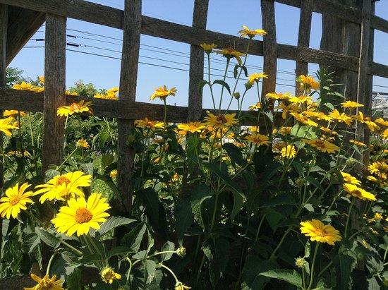 Swanton, VT: Summertime