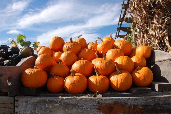 Swanton, VT: Decorative pumpkins