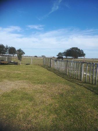 Garden Route Horse Trails-bild