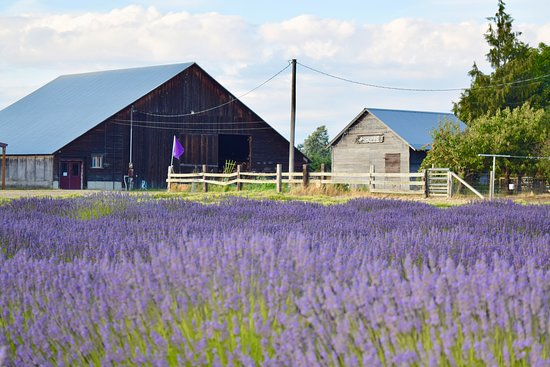 Sequim, WA: The barn and the Shoppe