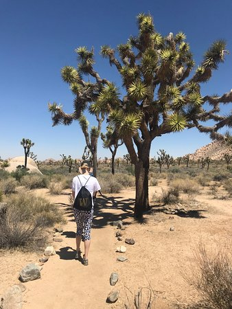 Walking through the Joshua trees.