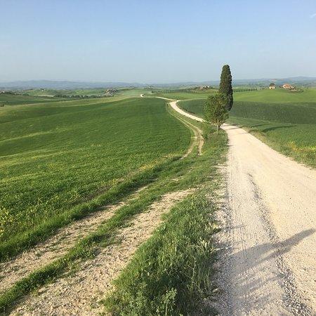 Ville di Corsano, Italy: Agriturismo La Roverella