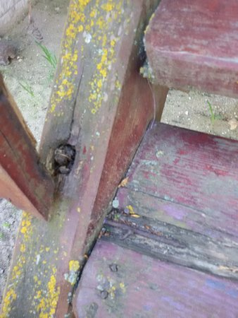 Pokrovka, Ουκρανία: Сгнившие балясины и ступени на лестнице в срубе.