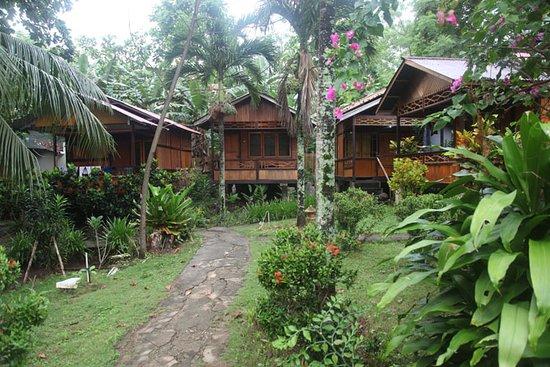 Daniel's Resort aka Daniel's Homestay: pekarangan yang rindang