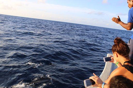 38 delfin bilder kostenlos  besten bilder von ausmalbilder