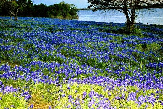 Ennis, Teksas: Lovely landscape