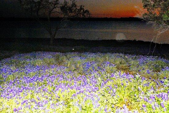 Ennis, Teksas: Bonnets as the moon rose