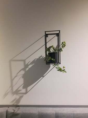 Nipawin, Canada: Striking Plant Holder- Wall Shadow