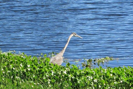 Lake Worth Municipal Park