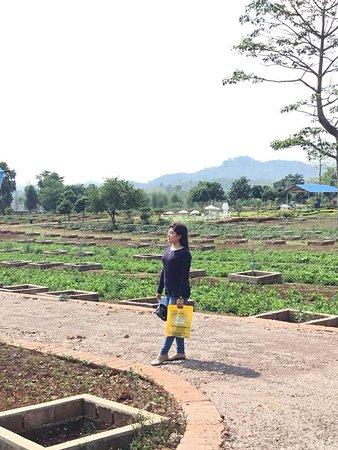 FAME Organic Pharming Project: Let's take a tour around farm..