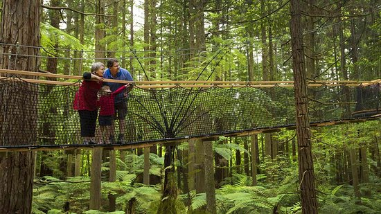 Auckland & Beyond Tours: Explore New Zealand's pure untouched nature!