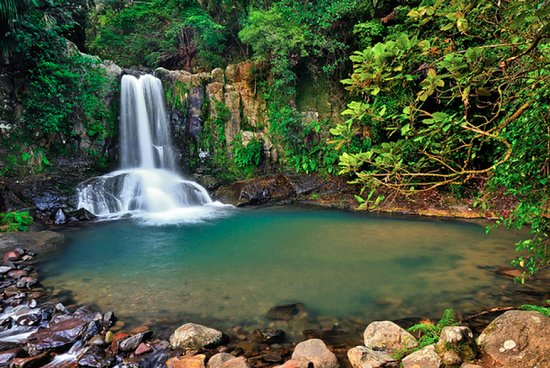 Auckland & Beyond Tours: Jump in the water in Waiua Waterfalls