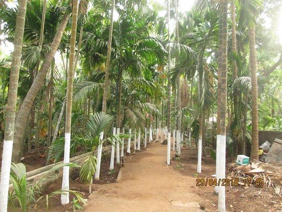 Nandgaon Φωτογραφία