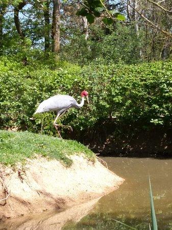 Le Parc des Oiseaux : IMAG0390_large.jpg