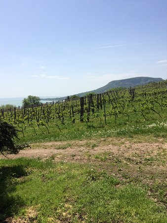 Badacsonyors, Hungary: A balatoni panoráma kivételes, a kép nem adja vissza.