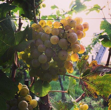 Weingut Familie Pitnauer