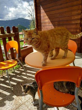 Bolzano Novarese, إيطاليا: micetti in attesa