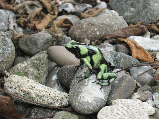 Acandi, Colombia: Visitantes