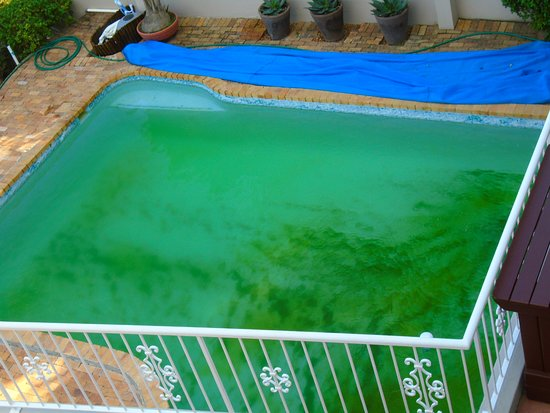 African Dreams Guest House Camps Bay: Slimey unusable pool