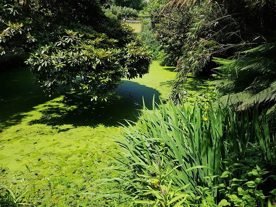 St Austell, UK: a pond covered in weeds