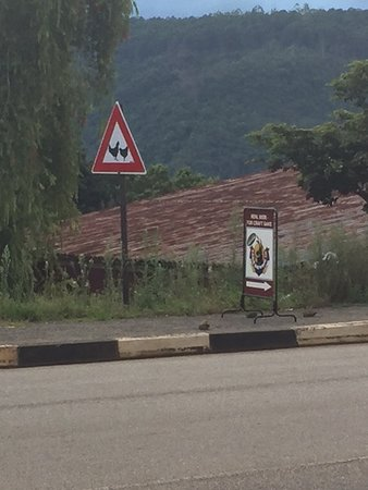 Sabie, South Africa: Rooster Crossing Sign