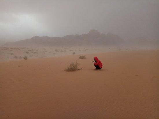 South Beach: Красный гриб на фоне песчаной бури)