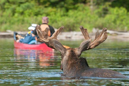 Ontario, Canada: Algonquin Park