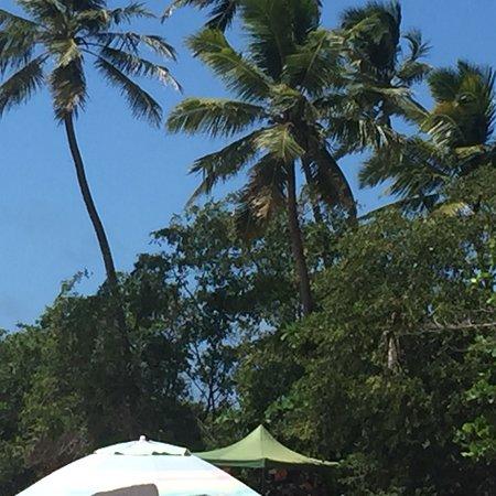 Praia do Coqueirinho: photo4.jpg