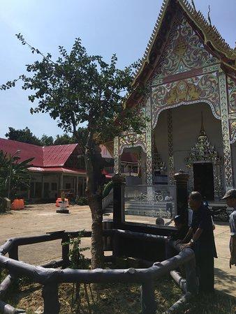 Pua, Thailand: ต้นดิ๊กเดียม ต้นไม้จั๊กจี้ได้ ด้านหลังเป็นโบสถ์วัดปรางค์
