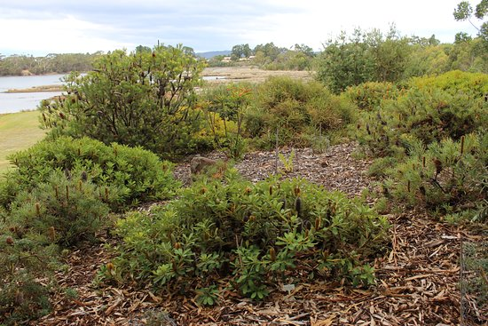 Inverawe Native Gardens: lovely native plants