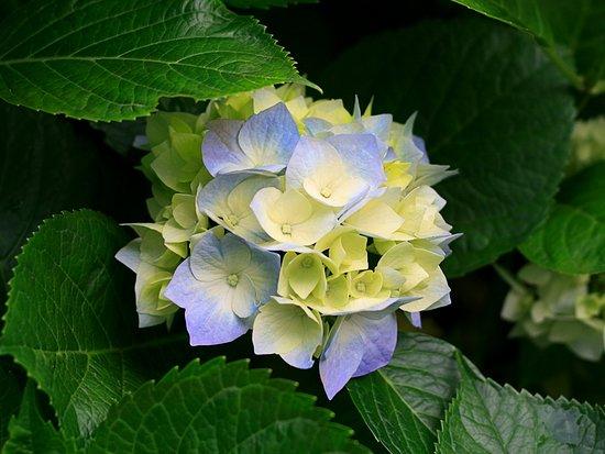 Munduk, إندونيسيا: munduk flower