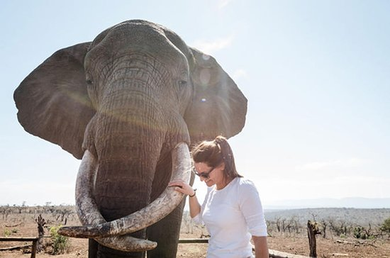 Bayete Elephant Interaction & St...