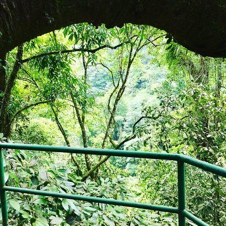Parrita, Kostaryka: 🌳