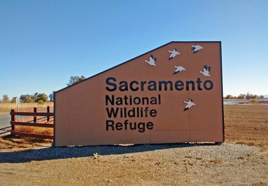 Willows, CA: Sacramento National Wildlife Refuge