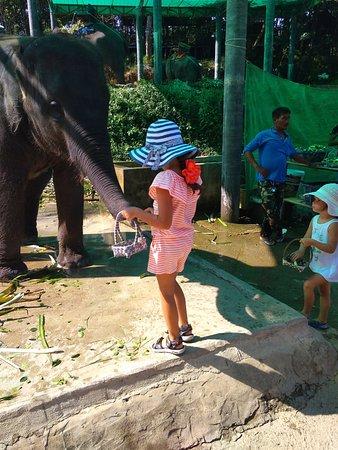 Seaview Elephant Camp: Слон
