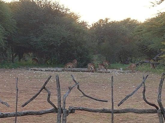 Ghanzi, Botswana: 20180501_070755_large.jpg