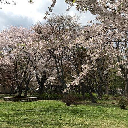 Shiroishi Park